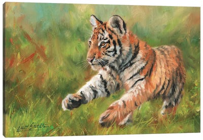 Tiger Cub Running by David Stribbling Canvas Art Print