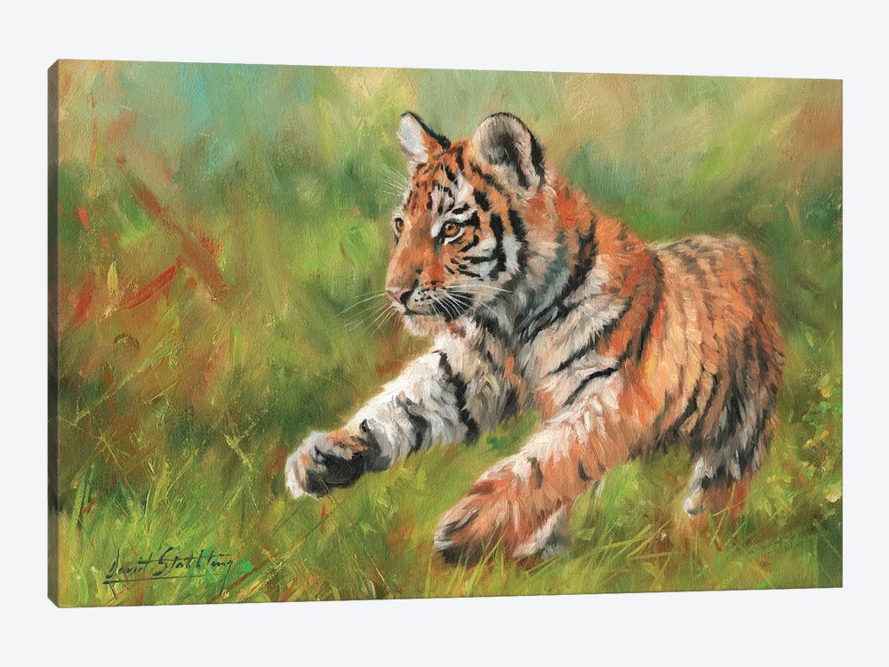 Tiger Cub Running by David Stribbling 1-piece Canvas Print