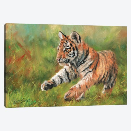 Tiger Cub Running 3-Piece Canvas #STG110} by David Stribbling Canvas Print