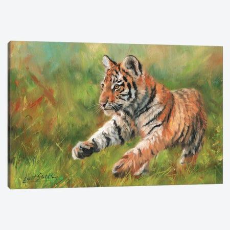 Tiger Cub Running Canvas Print #STG110} by David Stribbling Canvas Print