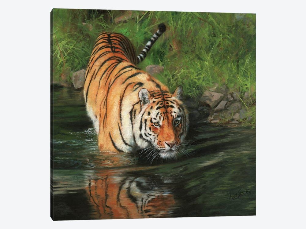 Tiger Entering River by David Stribbling 1-piece Canvas Artwork
