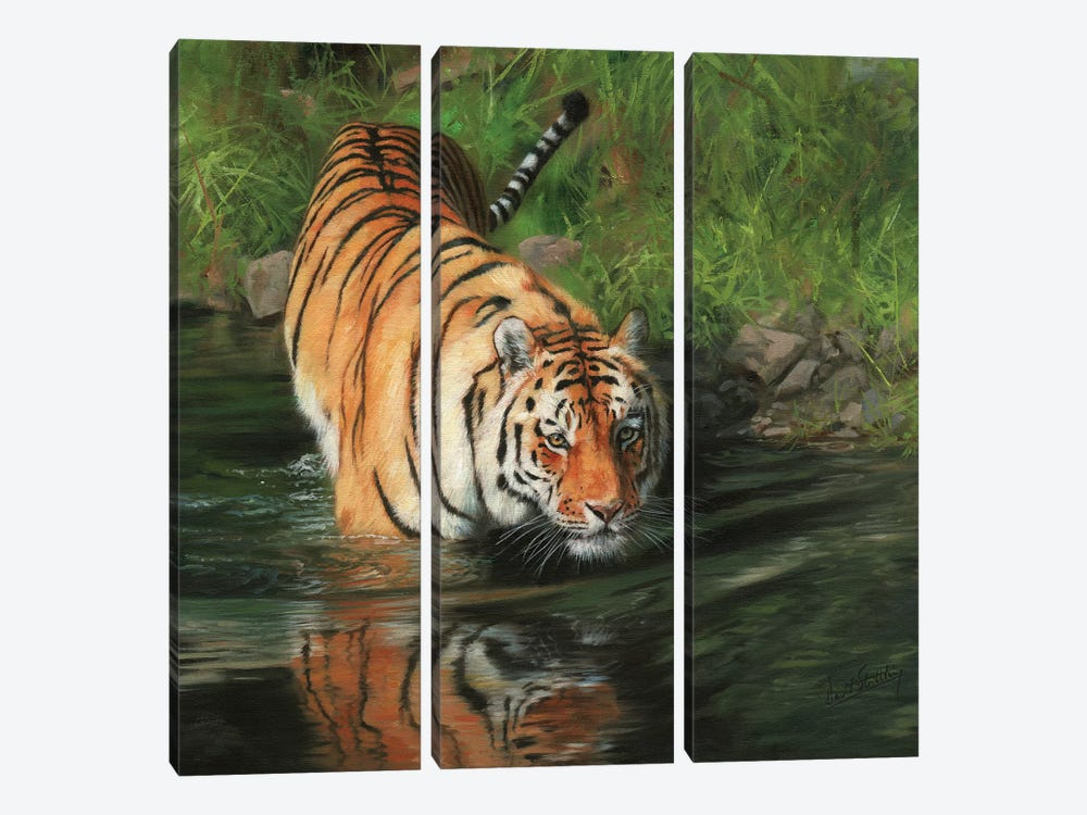 Tiger Entering River by David Stribbling 3-piece Canvas Art