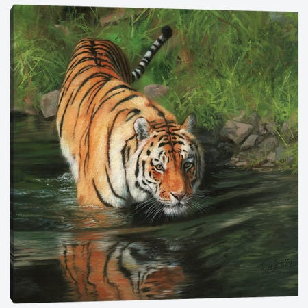 Tiger Entering River 3-Piece Canvas #STG111} by David Stribbling Canvas Print