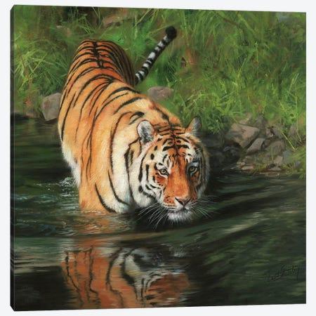 Tiger Entering River Canvas Print #STG111} by David Stribbling Canvas Print