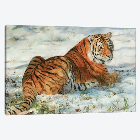 Tiger In Snow Canvas Print #STG112} by David Stribbling Art Print