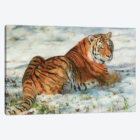 Tiger In Snow Canvas Print #STG112} by David Stribbling Art Print