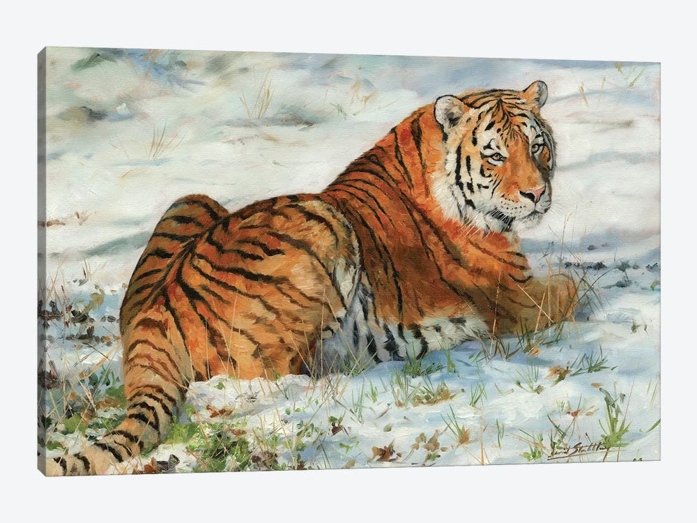 Tiger In Snow by David Stribbling 1-piece Canvas Art Print