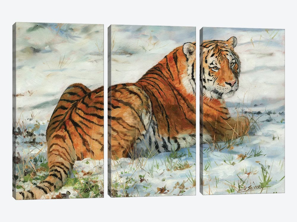 Tiger In Snow by David Stribbling 3-piece Canvas Print