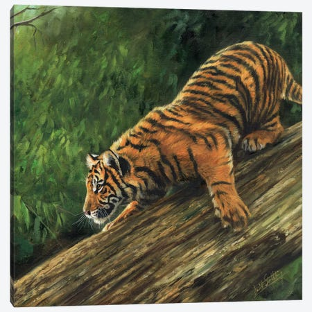 Tiger In Tree Canvas Print #STG113} by David Stribbling Canvas Art Print