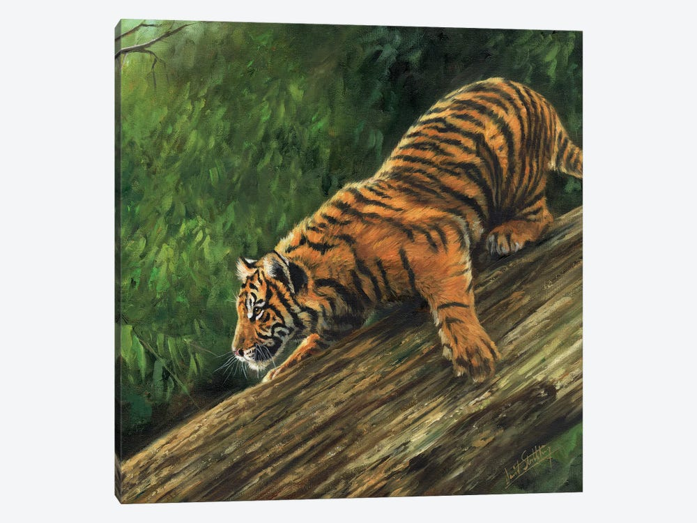 Tiger In Tree by David Stribbling 1-piece Canvas Artwork