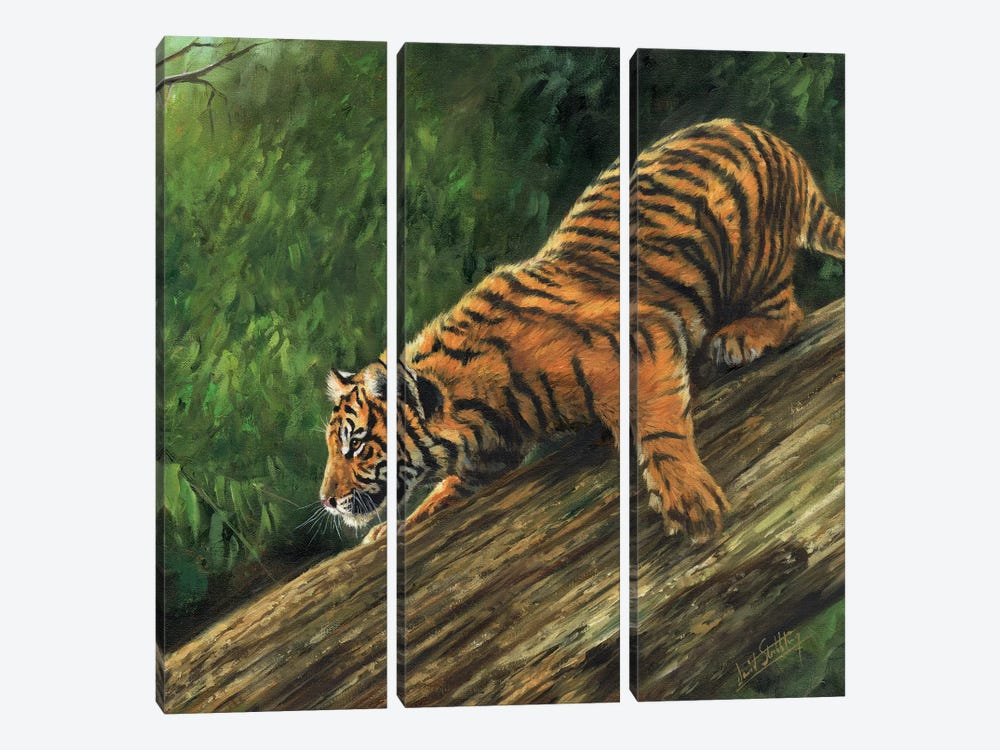 Tiger In Tree by David Stribbling 3-piece Canvas Wall Art