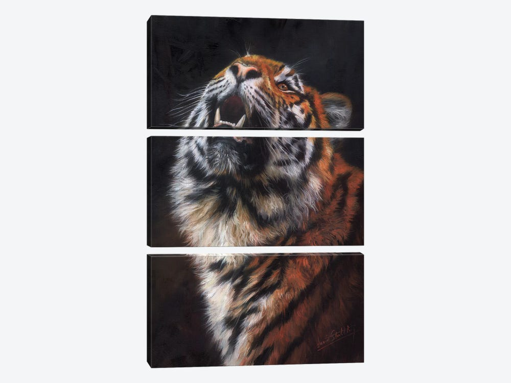 Tiger Looking Up by David Stribbling 3-piece Canvas Print