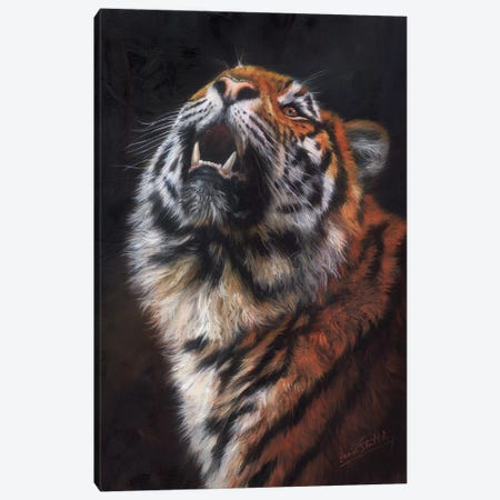 Tiger Looking Up Canvas Print #STG114} by David Stribbling Canvas Artwork