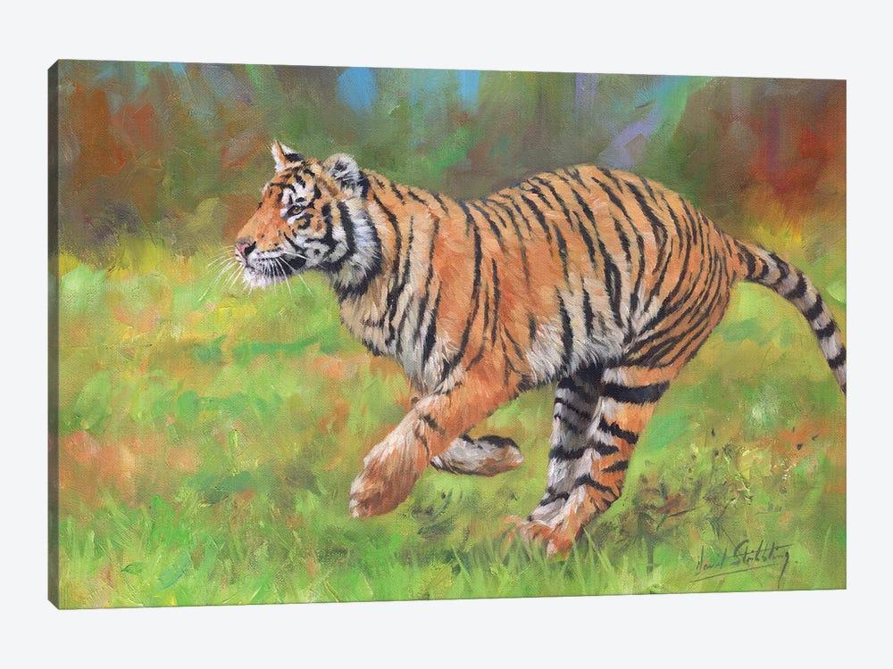 Tiger Running by David Stribbling 1-piece Canvas Artwork
