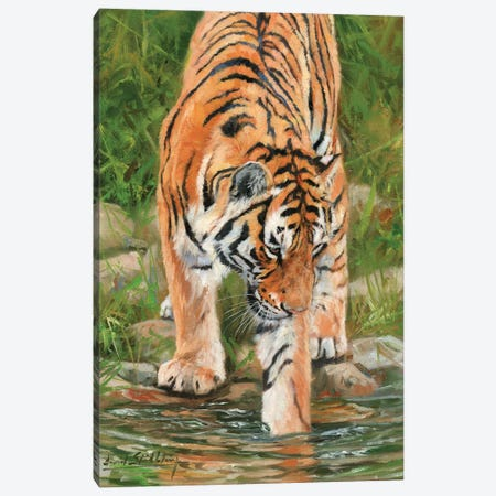 Tiger Stream Canvas Print #STG116} by David Stribbling Canvas Artwork