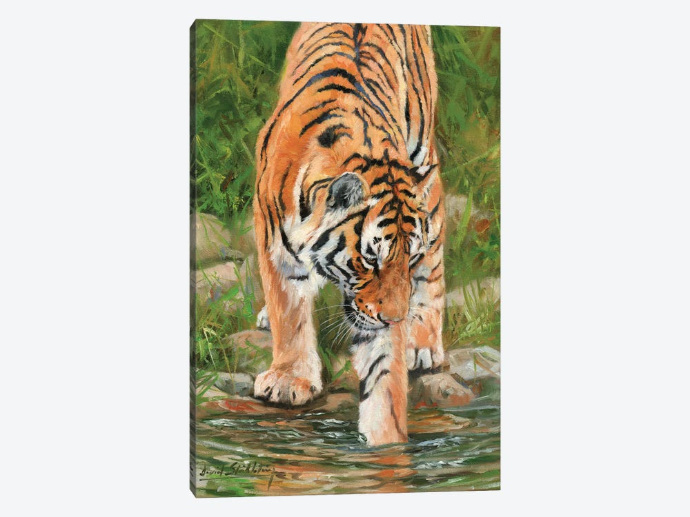 Tiger Stream by David Stribbling 1-piece Canvas Print