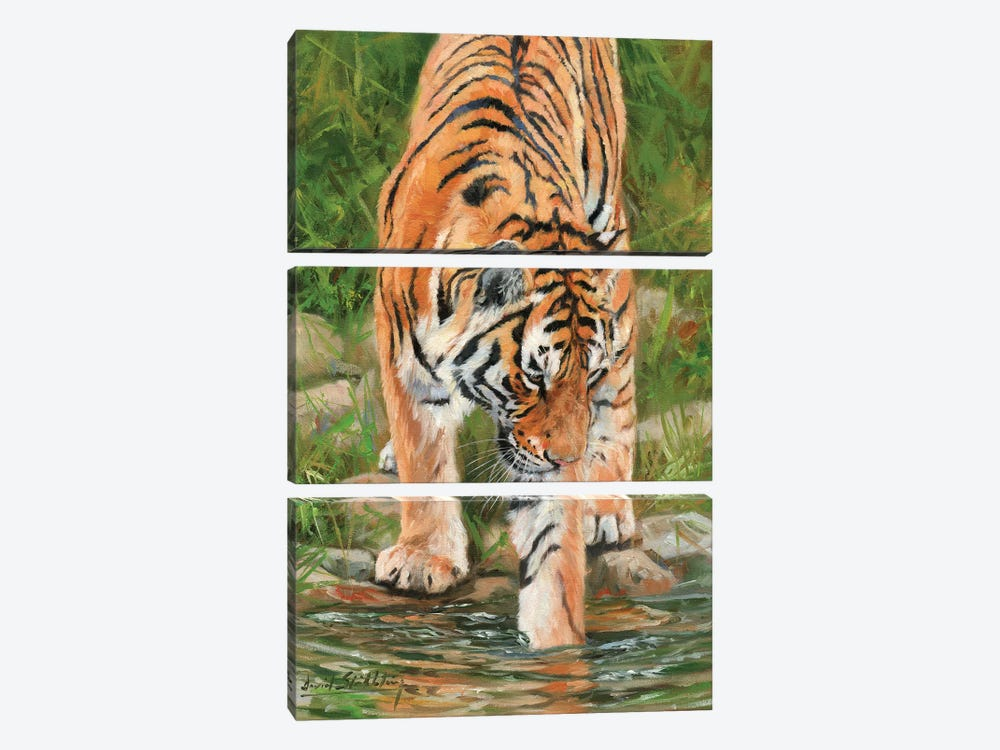 Tiger Stream by David Stribbling 3-piece Canvas Art Print