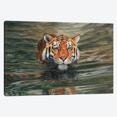 Tiger Water Front Canvas Print #STG117} by David Stribbling Canvas Artwork