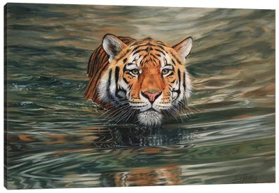 Tiger Water Front Canvas Art Print
