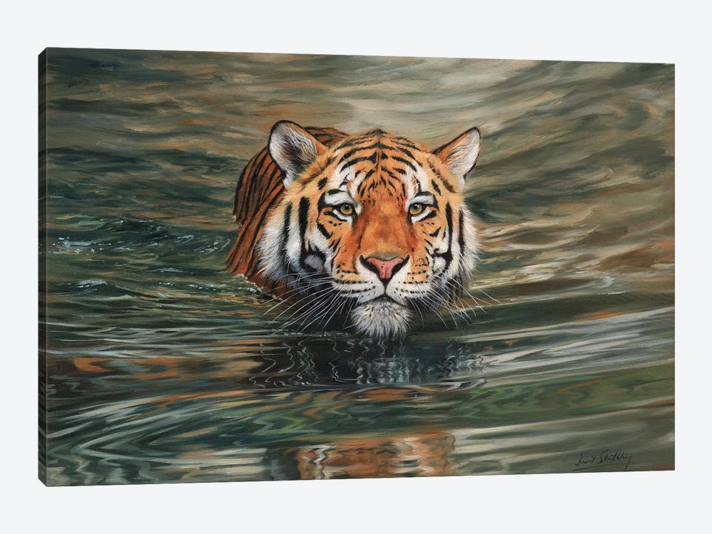 Tiger Water Front by David Stribbling 1-piece Canvas Artwork