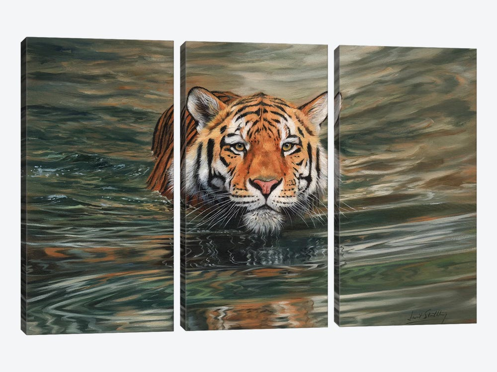 Tiger Water Front by David Stribbling 3-piece Canvas Wall Art
