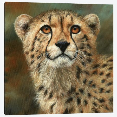 Cheetah Portrait Canvas Print #STG118} by David Stribbling Canvas Art Print