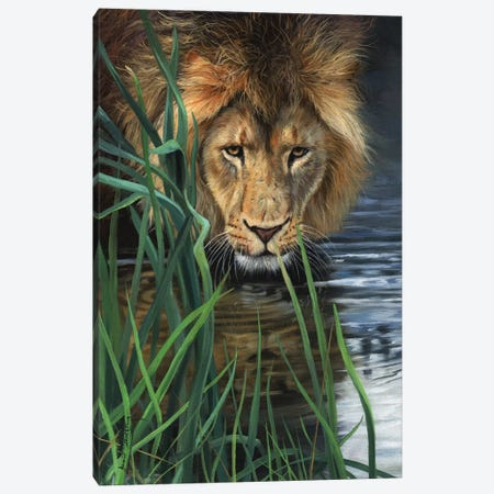 Lion In Grass & Water Canvas Print #STG119} by David Stribbling Art Print