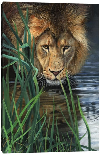 Lion In Grass & Water by David Stribbling Canvas Art Print
