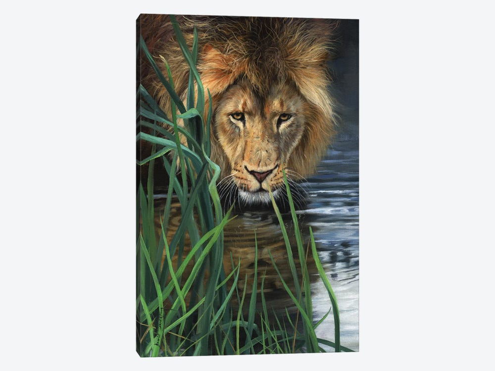 Lion In Grass & Water by David Stribbling 1-piece Canvas Artwork