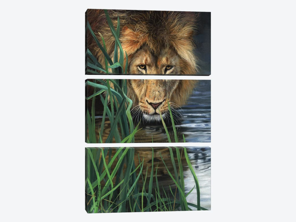 Lion In Grass & Water by David Stribbling 3-piece Canvas Artwork