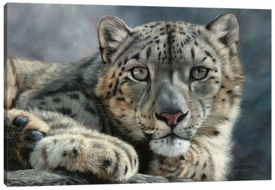 Snow Leopard Portrait by David Stribbling Canvas Art Print