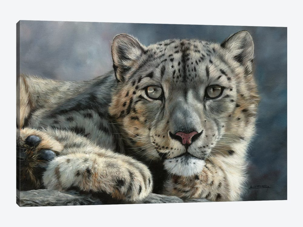 Snow Leopard Portrait by David Stribbling 1-piece Canvas Wall Art