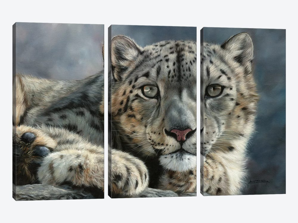 Snow Leopard Portrait by David Stribbling 3-piece Canvas Art