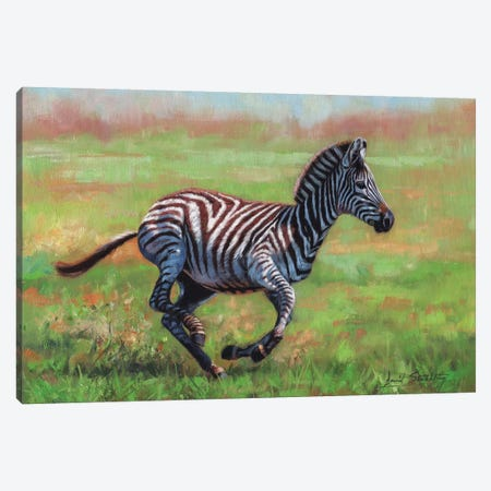 Zebra Running Canvas Print #STG121} by David Stribbling Canvas Art