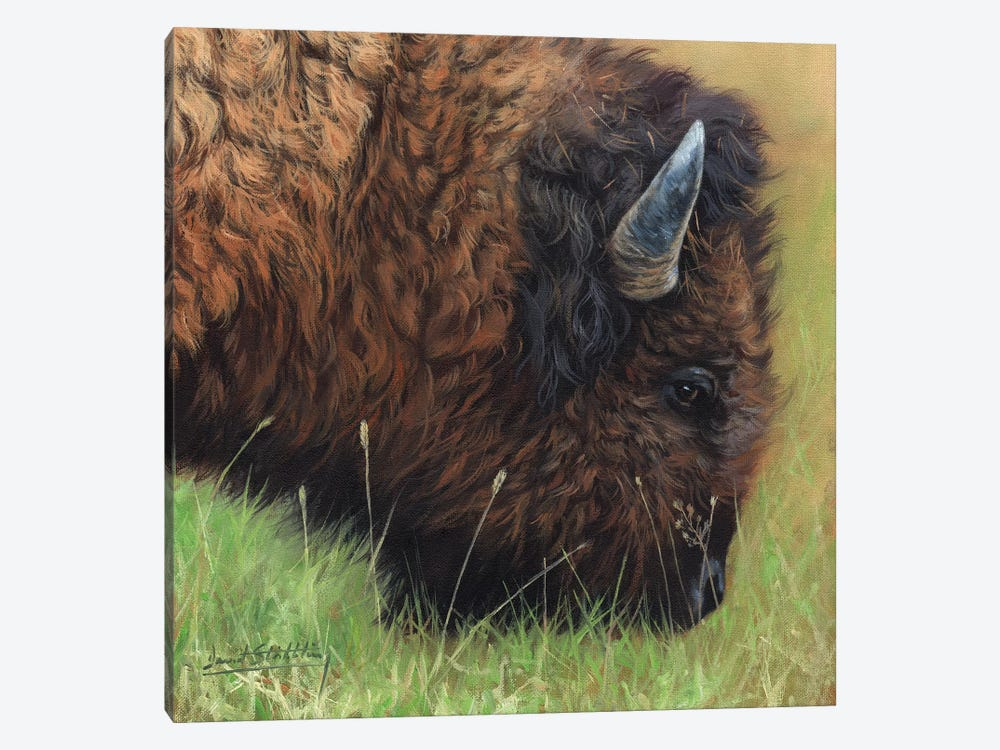 Bison Grazing 1-piece Canvas Artwork