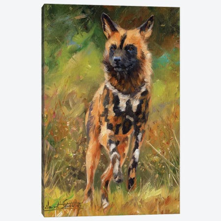 African Wild Dog Canvas Print #STG123} by David Stribbling Canvas Wall Art