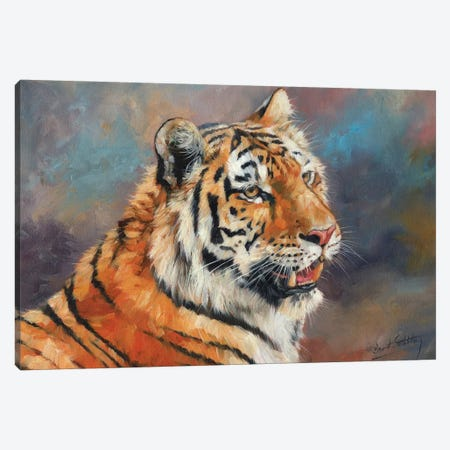 Amur Tiger II 3-Piece Canvas #STG125} by David Stribbling Canvas Print