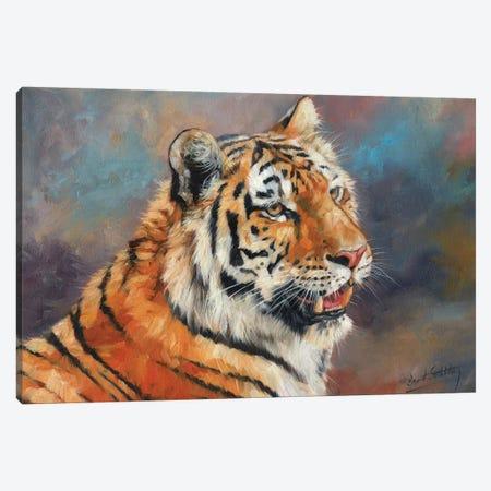 Amur Tiger II Canvas Print #STG125} by David Stribbling Canvas Print