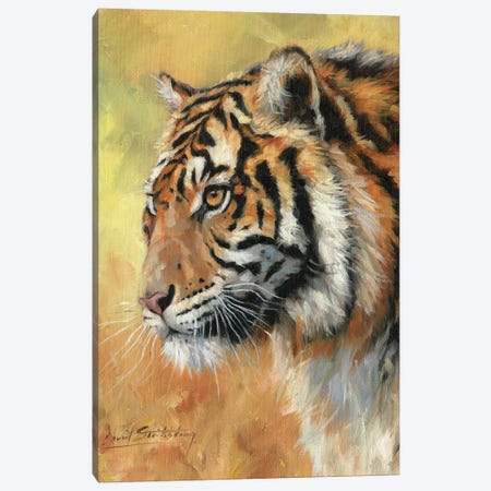 Amur Tiger Portrait Canvas Print #STG126} by David Stribbling Canvas Print