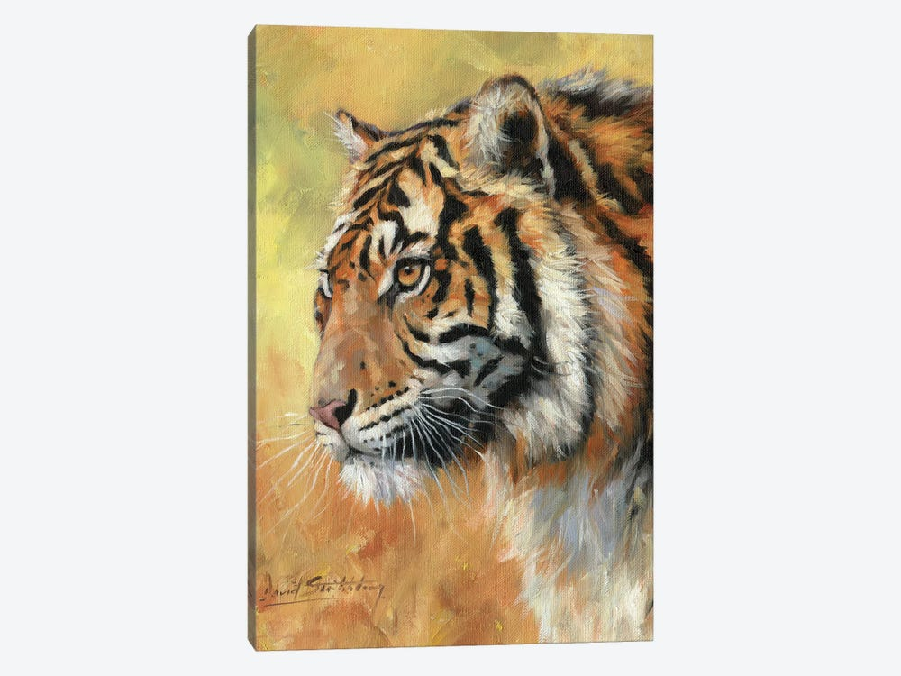 Amur Tiger Portrait by David Stribbling 1-piece Canvas Art