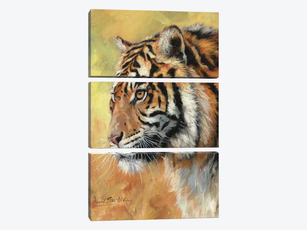 Amur Tiger Portrait by David Stribbling 3-piece Canvas Art