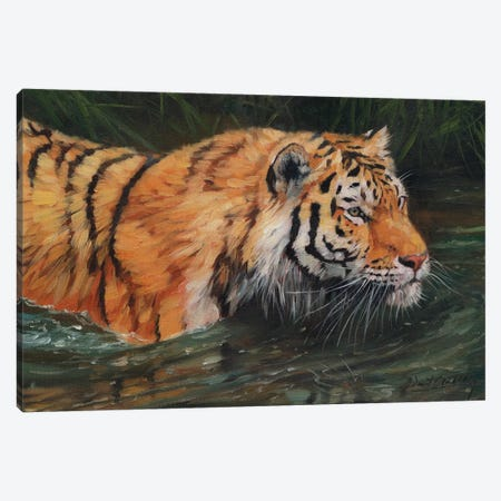 Amur Tiger River 3-Piece Canvas #STG127} by David Stribbling Canvas Print