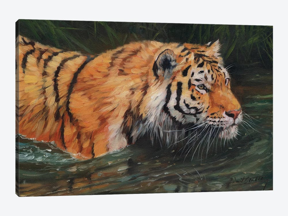 Amur Tiger River by David Stribbling 1-piece Art Print