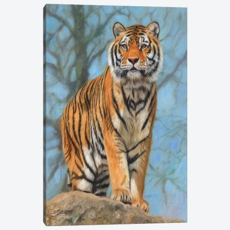 Amur Tiger Watch Canvas Print #STG128} by David Stribbling Canvas Artwork