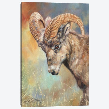 Bighorn Sheep Canvas Print #STG129} by David Stribbling Canvas Artwork