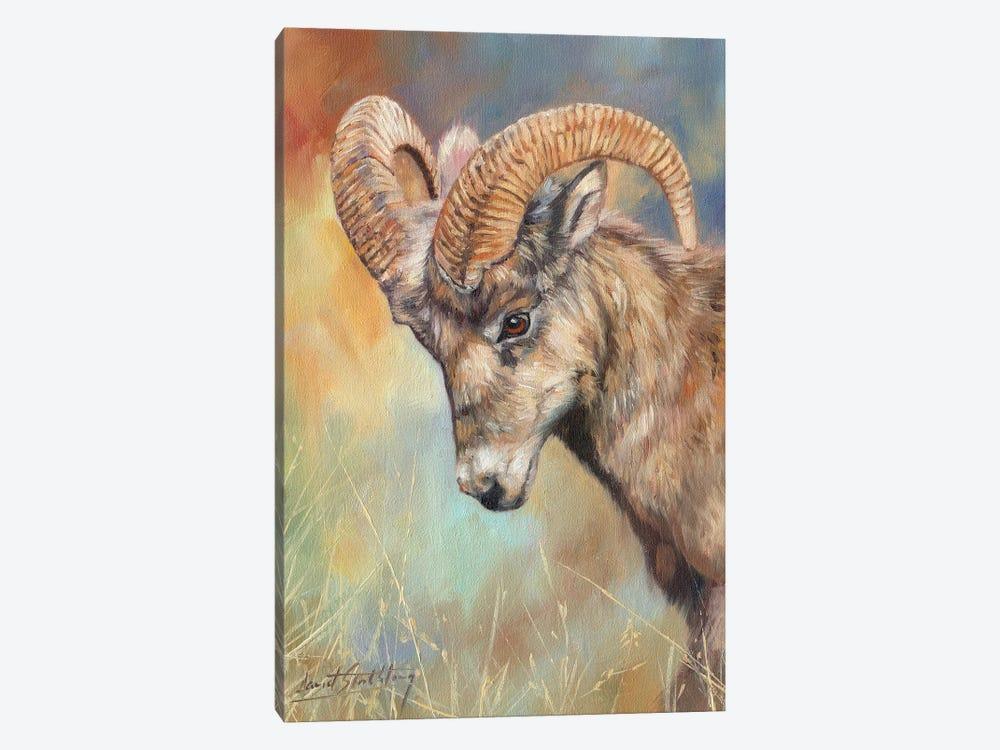 Bighorn Sheep by David Stribbling 1-piece Art Print