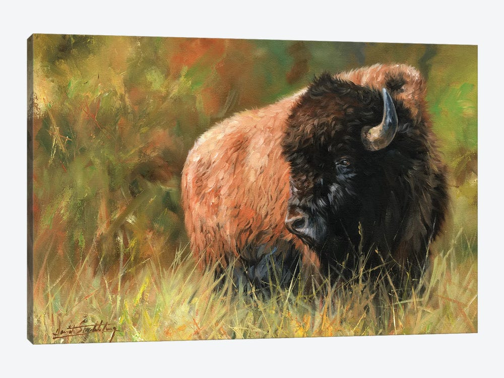 Bison I by David Stribbling 1-piece Canvas Art