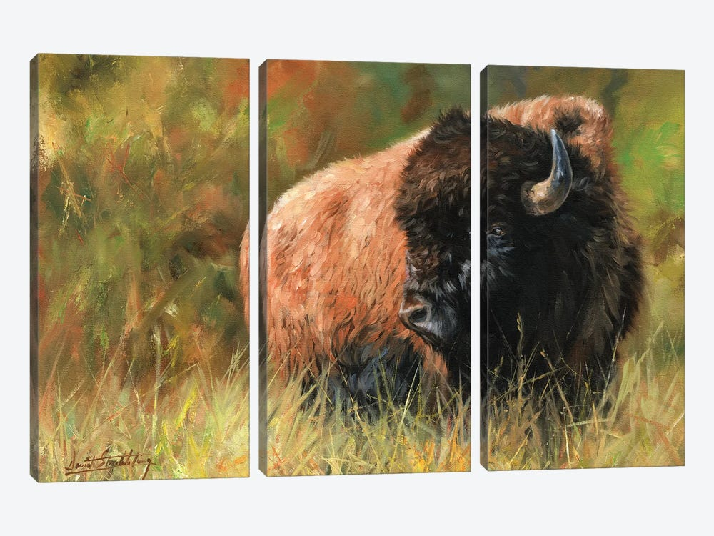 Bison I by David Stribbling 3-piece Canvas Wall Art