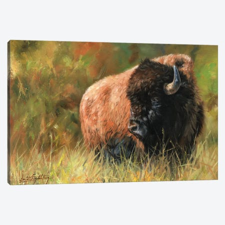 Bison I 3-Piece Canvas #STG12} by David Stribbling Canvas Print