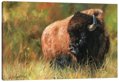Bison I Canvas Art Print